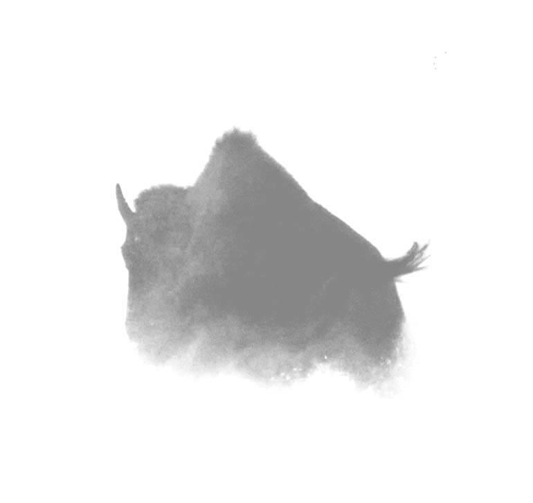 Photography, Wildlife, Bison
