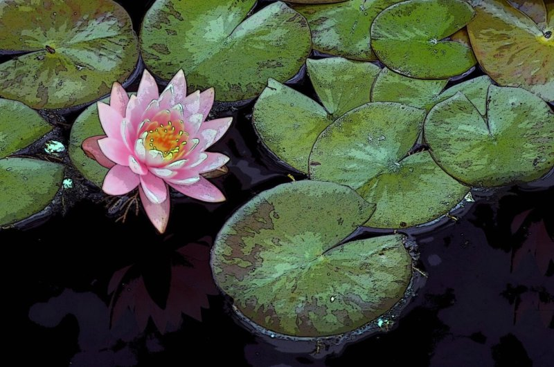 Lily Pad - Pink Flower