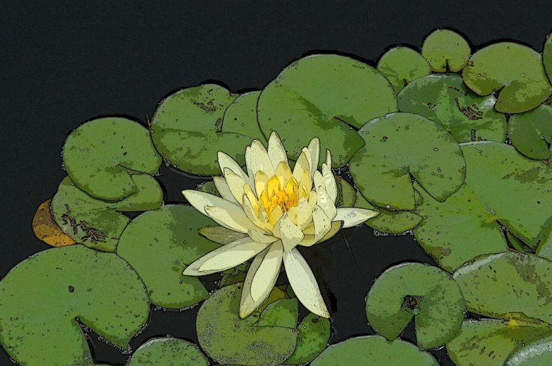 Lily Pad - Yellow Flower