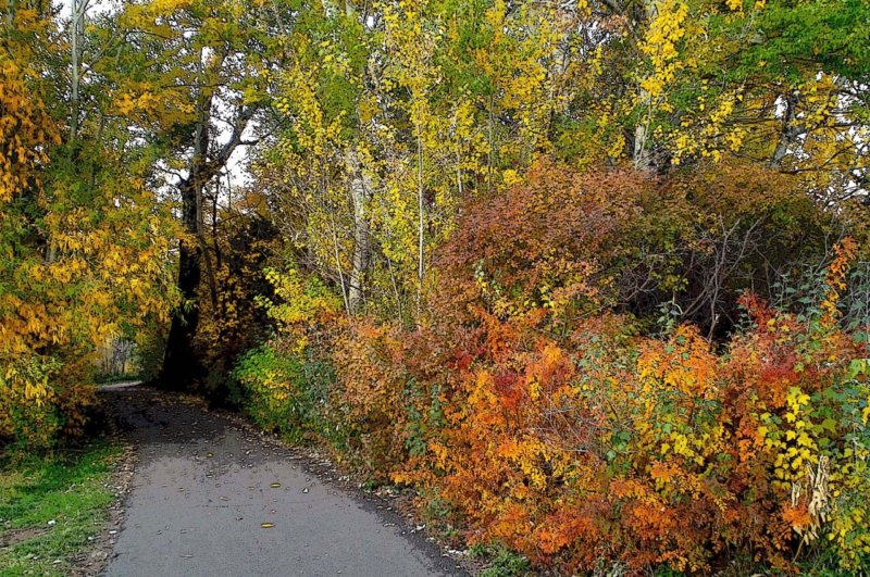Brilliant Fall on Bike Path
