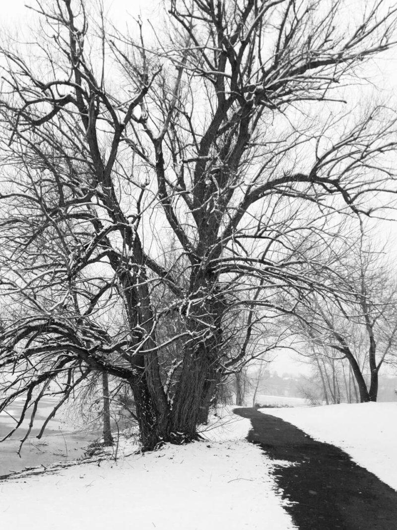 Trail with Big Tree in Black and White