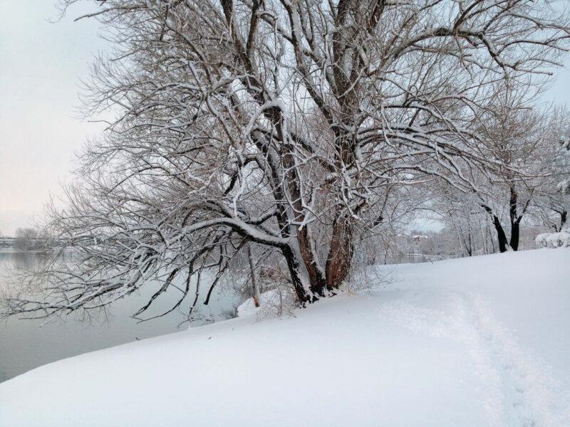 Snowy Trial