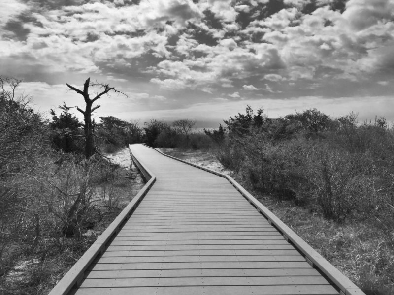 Long Island Boardwalk with Tree - Black and White